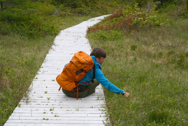 Marian practicing her botany skills on the way to the Top of Twillingate